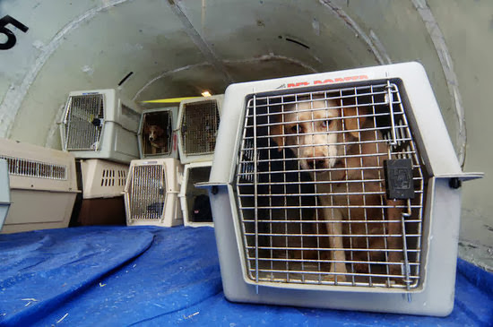 d88c93f6ffe5e7c5_maggie_rizers_dog_dies_on_airplane-preview