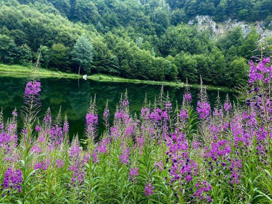 Donje Bare NP Sutjeska